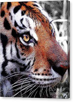 Eye Of The Tiger Canvas Print by Animals Art