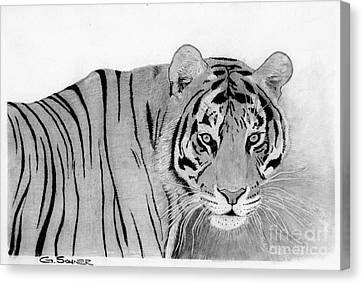Eye Of The Tiger Canvas Print by George Sonner