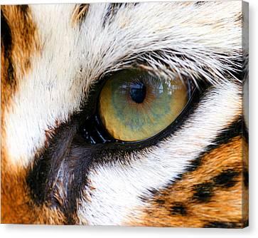 Eye Of The Tiger Canvas Print by Helen Stapleton