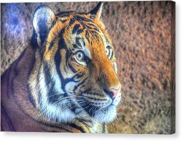 Eye Of The Tiger Canvas Print by Randy Dyer