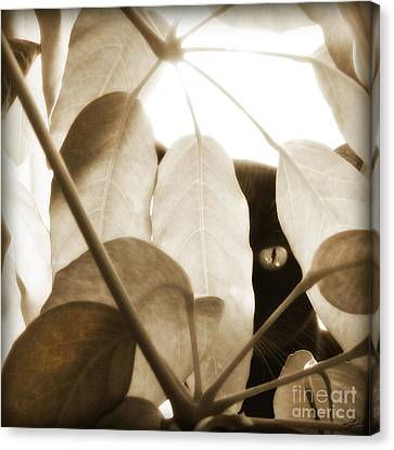 Canvas Print featuring the photograph Eye Spy by Shevon Johnson