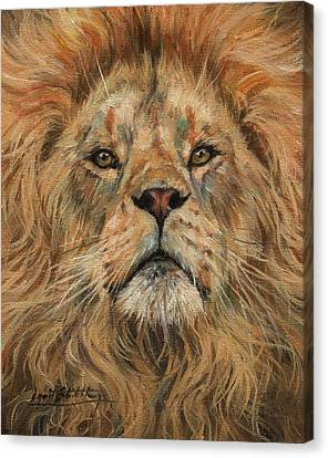 Close Up Canvas Print - Eye To Eye, Lion. by David Stribbling