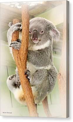 Eye To Eye With Mr. Koala Canvas Print by Susan Vineyard