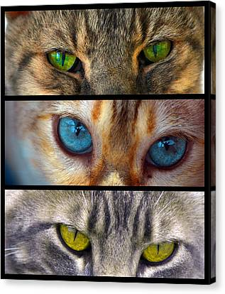 Eyes 1 Canvas Print