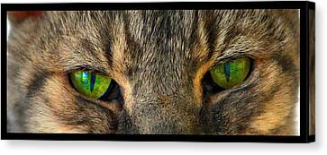 Eyes 1a Canvas Print