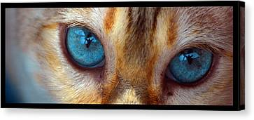 Eyes 1b Canvas Print