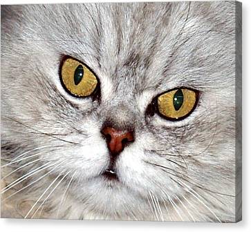 Eyes Canvas Print by Arik Baltinester