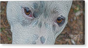 Eyes Of Concern Canvas Print by Kim Pate