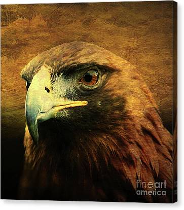 Eyes Of The Golden Hawk . Square Canvas Print by Wingsdomain Art and Photography