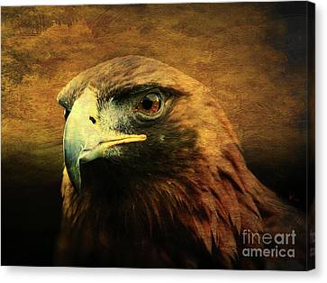 Eyes Of The Golden Hawk Canvas Print by Wingsdomain Art and Photography