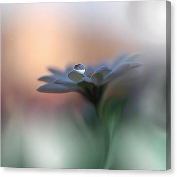 Eyes Of The Light Canvas Print