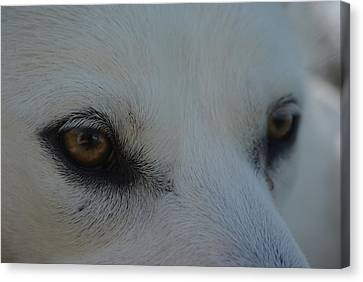 Eyes Of The Wolf - In Her Eyes Canvas Print by Robyn Stacey