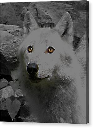 Canvas Print featuring the photograph Eyes Of The Wolf by Debra     Vatalaro