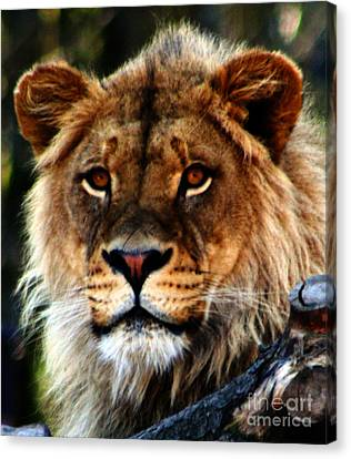 Eyes Of The Young King Canvas Print by Nick Gustafson