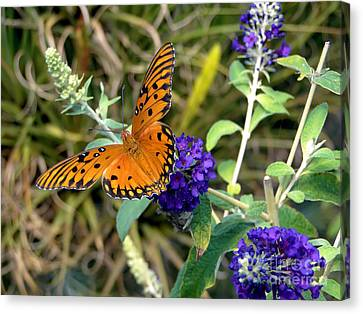 Canvas Print featuring the photograph Eyes On A Butterfly by Sue Melvin