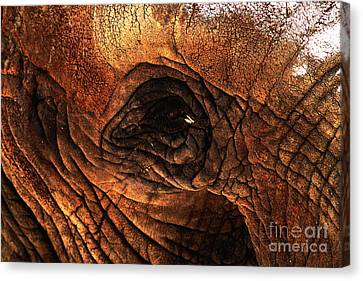 Eyes Through The Canyon Of Time Canvas Print by Wingsdomain Art and Photography