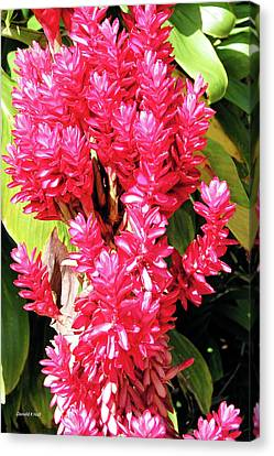 F10 Red Ginger Canvas Print by Donald k Hall