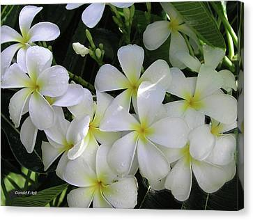 F2 Plumeria Frangipani Flowers Hawaii Canvas Print by Donald k Hall