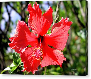 F20 Red Hibiscus Canvas Print by Donald k Hall
