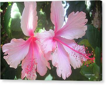 F4 Hibiscus Flowers Hawaii Canvas Print by Donald k Hall