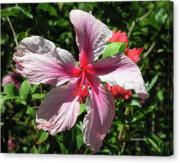 F5 Hibiscus Flower Hawaii Canvas Print by Donald k Hall