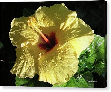F9 Yellow Hibiscus Canvas Print by Donald k Hall