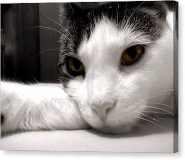 Fabulous Feline Canvas Print
