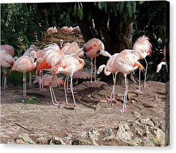 Fabulous Flamingos Canvas Print