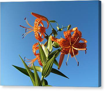 Fabulous Tiger Lily Canvas Print by Tina M Wenger