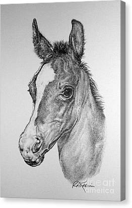 Face Of A Foal Canvas Print by Roy Anthony Kaelin