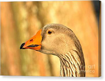 Face Of A Toulouse Goose Canvas Print by Adam Jewell