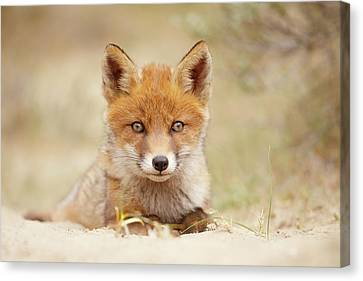 Face Of Innocence - Red Fox Kit Canvas Print by Roeselien Raimond