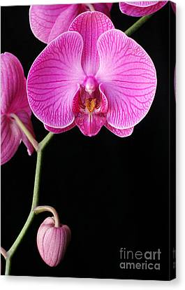 Face Of Orchid Canvas Print by Angie Bechanan