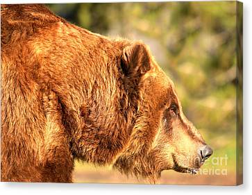 Face Of The Kodiak Canvas Print