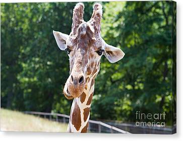 Face To Face  Canvas Print by A New Focus Photography