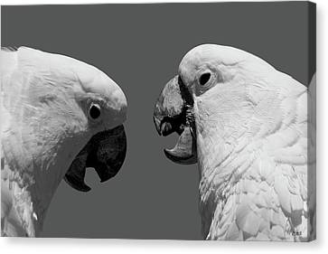 Canvas Print featuring the photograph Face To Face Iv Bw by David Gordon