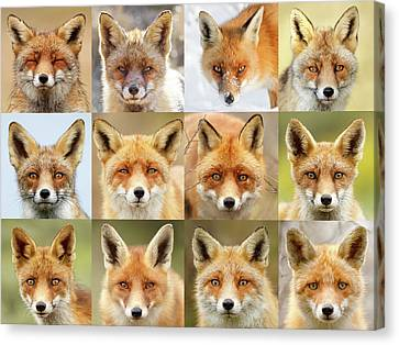 Faces Of Foxes Canvas Print by Roeselien Raimond