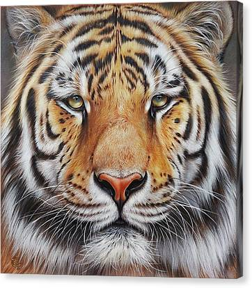 Faces Of The Wild - Amur Tiger Canvas Print by Elena Kolotusha
