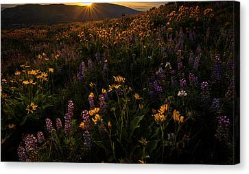 Canvas Print featuring the photograph Facing The Day by Mike Lang