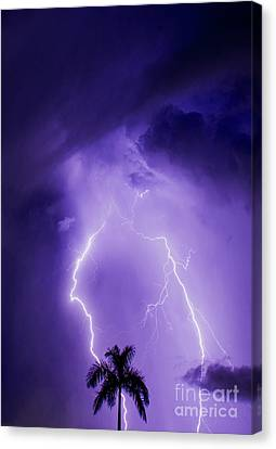 Facing The Storm Canvas Print
