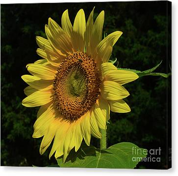 Hand Made By God Canvas Print
