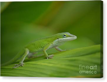 Blending Canvas Print - Fade Into The Green by Kathy Gibbons