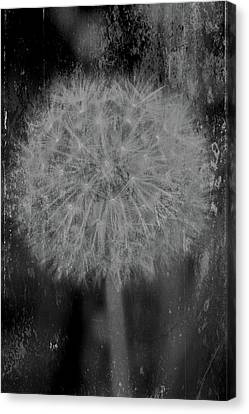 Fade To Black Canvas Print by Odd Jeppesen