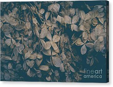 Canvas Print featuring the photograph Faded Flowers by Edward Fielding