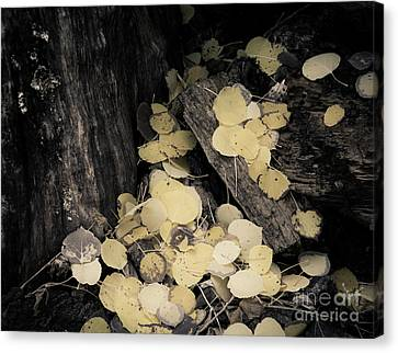 Canvas Print featuring the photograph Faded Pot Of Gold by The Forests Edge Photography - Diane Sandoval