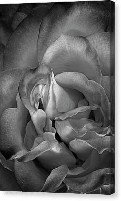 Canvas Print featuring the photograph Fading Beauty by Mike Lang