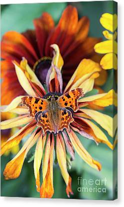 Fading Summer Glory Canvas Print by Tim Gainey