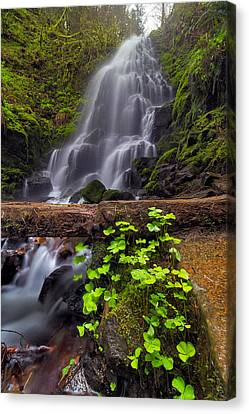 Fairy Falls In Spring Canvas Print by David Gn