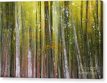 Canvas Print featuring the photograph Fairy Forest I by Yuri Santin