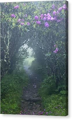 Gnarly Canvas Print - Fairy Path by Rob Travis